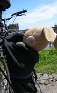Bunny on a bike ride. :)