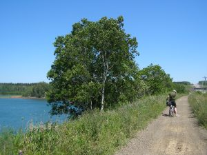 Our bike trip in the Annapolis Valley. The book I had with me was The Translation of Love by Lynne Kutsukake.